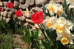 Flors jardí Park