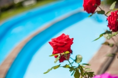 piscina i rosa