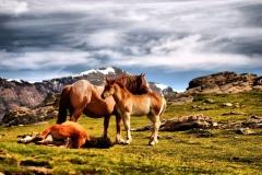 Cavalls alta muntanya
